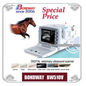 Veterinary Ultrasound Equine, Ultrasound Bovine, Ultrasound Swine (BW510V)