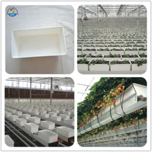 Durable Plastic Trough Bucket pictures & photos
