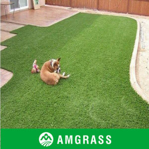 Safe and Soft Touch Pets Enjoyable PE Monofilament China Ornamental Synthetic Turf pictures & photos