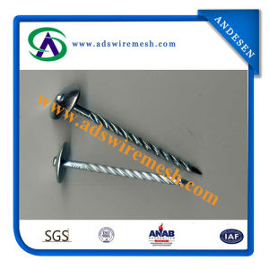 Galvanized Roofing Nail / Roofing Nails / Corrugated Roofing Nails Manufacturers in China pictures & photos