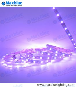 RGB+White+Cool White 72LEDs Per Meter 12mm LED Strip Light pictures & photos