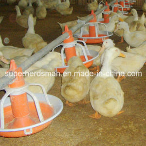 High Quality Poultry Feeders and Drinkers for Duck pictures & photos