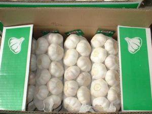 Garlic (03)