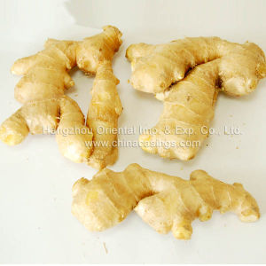 Fresh Ginger (F06)