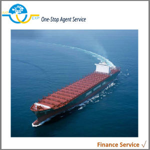 Shipping Logistics Customs Clearance Service