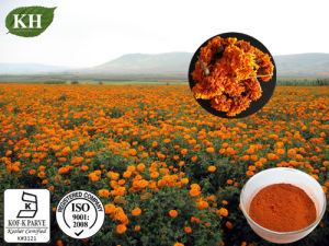Kingherbs′ 100% Natural Marigold Extract: Lutein 5%, 10%, 20%, 80%, 90% (UV, HPLC) ; Zeaxanthin 2%~50%. pictures & photos