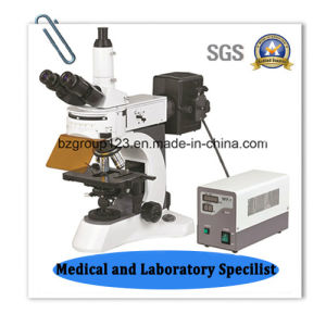Bz-118f Upright Fluorescent Laboratory Microscope pictures & photos