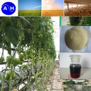 Ca Zinc Mn Mo Amino Acid Chelate Liquid Formulation Fertilizer pictures & photos