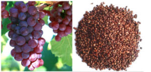 High Quality Grape Seed Extract pictures & photos