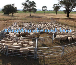 Heavy Durty Sheep Yards Panel for Sale (with ISO9001and SGS) pictures & photos