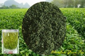 Fresh and Aroma Green Tea pictures & photos