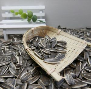 China Supplier Raw Sunflower Seeds 5009 with Top Quality