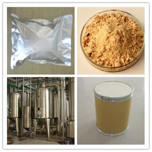 Panax Ginseng Leaf Extract, Ginseng Leaf Extract Ginsenosides pictures & photos
