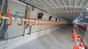 2017 Hot Sale Automatic Poultry Farm Equipment for Chicken House pictures & photos