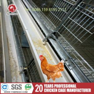 Cheap Automatic Bird Cage Chicken Poultry Farming Equipment pictures & photos
