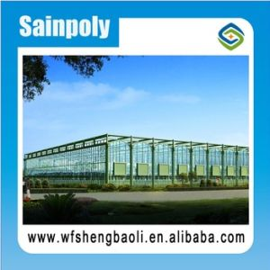 Sainpoly High Standard Commercial Glass Greenhouse pictures & photos