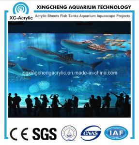Fashionable Wall-Mounted Acrylic Aquarium pictures & photos