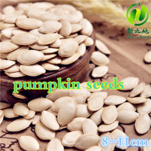 Chinese Shine Skin Pumpkin Seeds for Sale with Good Quality pictures & photos