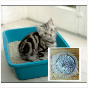 2016 Asian Factory Bentonite Apple Health and Hard Clumping Cat Litter pictures & photos