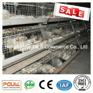 Broiler Battery Chicken Cage System pictures & photos