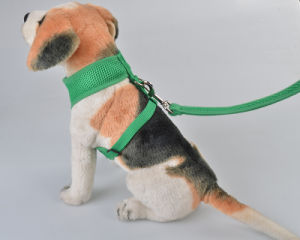 Latest Design Cotton Running Dog Collar and Leash pictures & photos