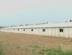Prefab Steel Fabrication Poultry Farm Specially for Africa pictures & photos