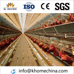 Steel Structure Chicken Raising House Prefab Poultry House pictures & photos