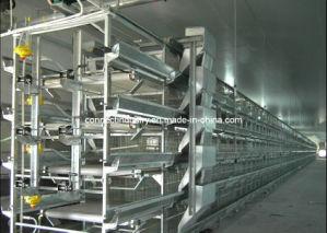 Poultry Farm Machine