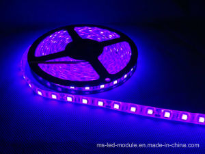 SMD 5050 DC12V IP67 Flexible LED Strip pictures & photos