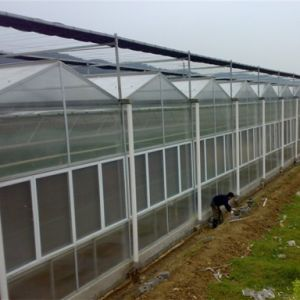Venlo PC Greenhouse Fp108g40 pictures & photos