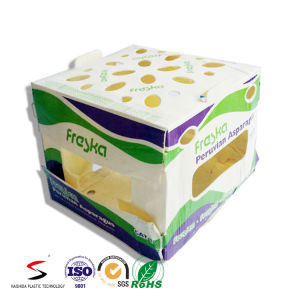 Twinwall PP Box Plastic Carton PP Fruit Box Recyclable Polypropylene Corflute Fruit Box Folding Box pictures & photos