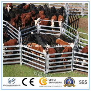 Heavy Duty Hot DIP Galvanized Horse Panel pictures & photos
