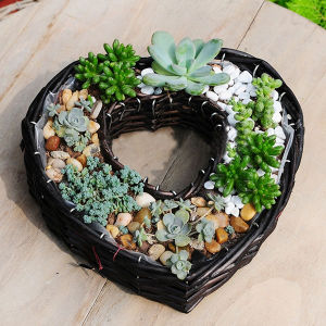 Willow Heart-Shape Flower Basket Succulent Plants Wicker Flower Pot pictures & photos