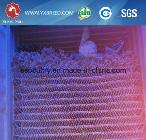 Strong and Durable Chicken Broiler Cage pictures & photos