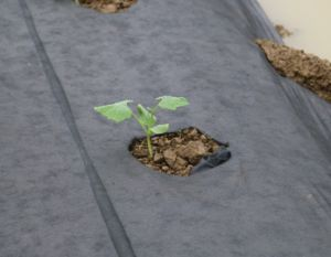 PP Nonwoven Landscape Weed Control Fabric Mat pictures & photos