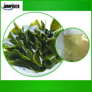 China Manufacturer Product Seaweed Meal pictures & photos