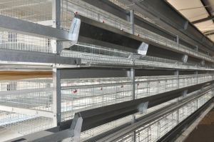 Poultry Farm Egg Layer Chicken Cages Equipment System (H Type Frame) pictures & photos