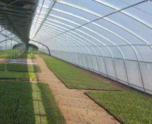 Flower Vegetable Steel Structure Green House pictures & photos