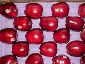 New Crop High Quality Fresh FUJI Apple pictures & photos