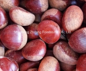 Chinese Fresh Chestnut for Exporting pictures & photos