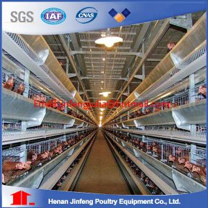 Automatic Poultry Farm Equipment with Prefab House pictures & photos
