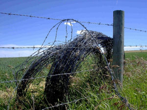 Galvanized Barbed Iron Wire (XMB06) pictures & photos