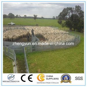Hot Sales Farm Fence Panel pictures & photos