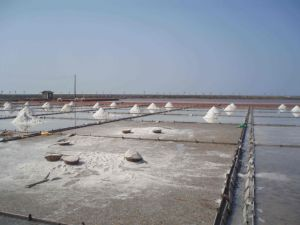 HDPE Geomembrane for Baysalt pictures & photos