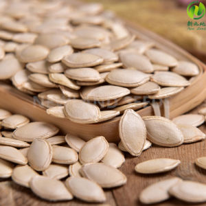 Most Popular Shine Skin Pumpkin Seeds 10-11cm for Export
