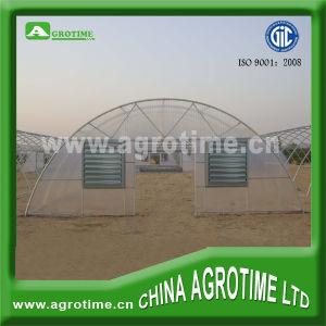 Economic Tunnel Film Greenhouses (CMR3810)