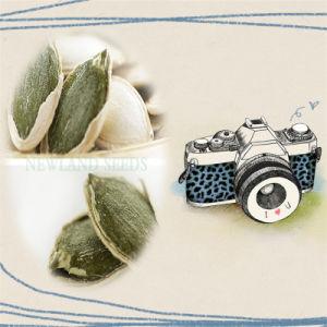 Inner Mongolia Shine Skin Pumpkin Seed for Export