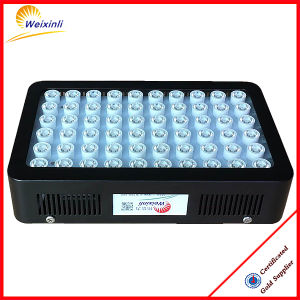 Promotion! Weixinli 300W LED Grow Light for Greenhouse pictures & photos