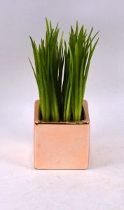 Handmade Nice Water Grass with Plating Ceramic Potted pictures & photos