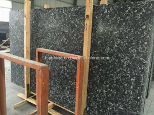 China Black Fossil/ Sea Shell Black Marble Slab pictures & photos